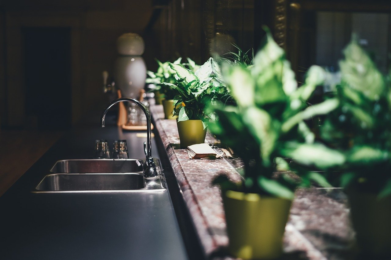 kitchen with indoor plants
