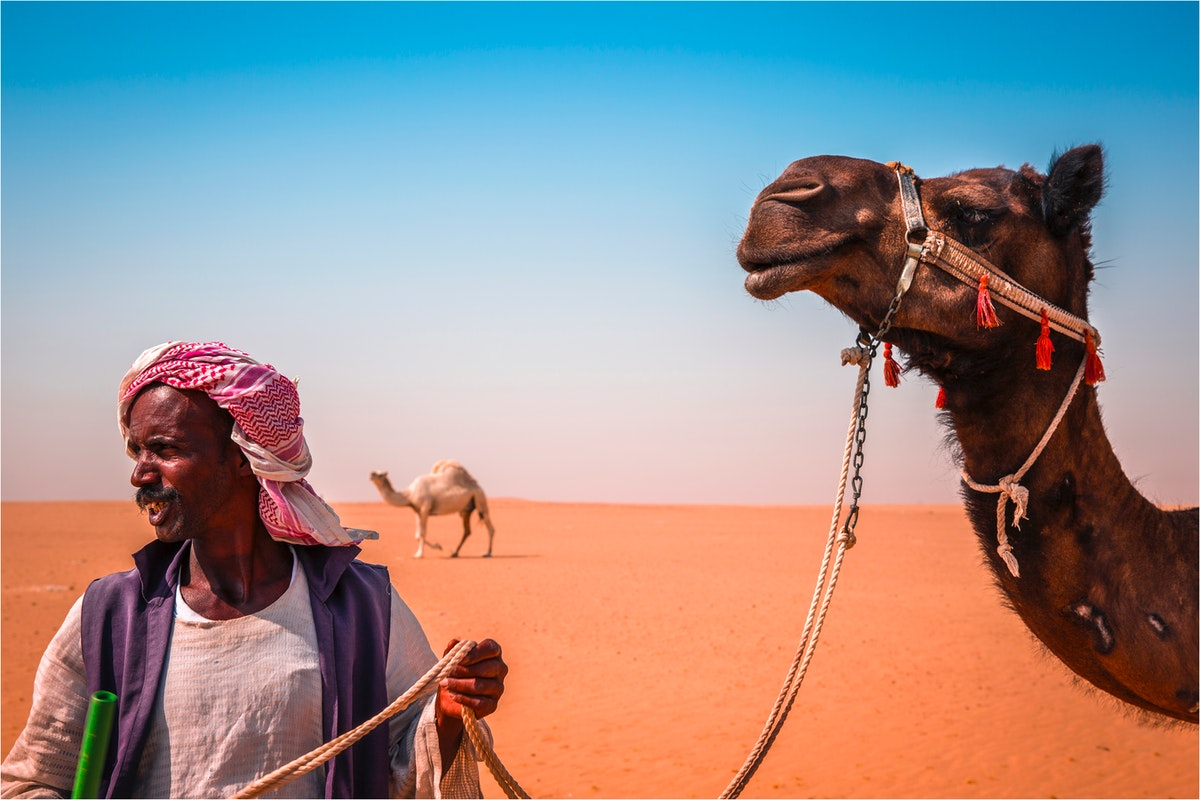 man holding rope camel